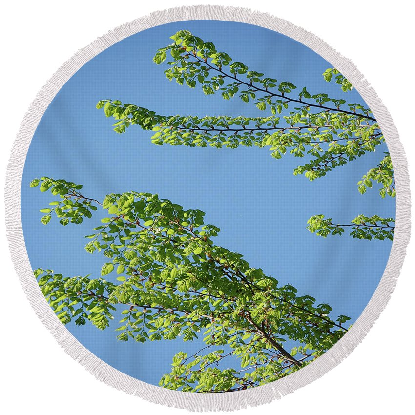 Tree Round Beach Towel featuring the digital art First Sign Of Spring I by DigiArt Diaries by Vicky B Fuller