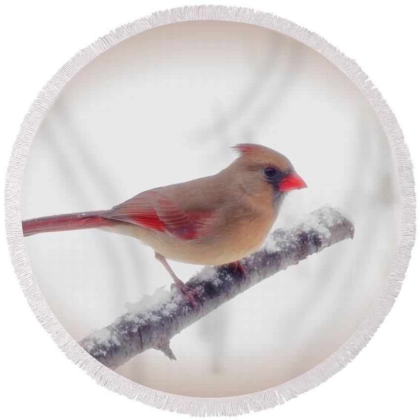 Bird Round Beach Towel featuring the photograph First Snow - Female Cardinal Bird With Vignette by MTBobbins Photography