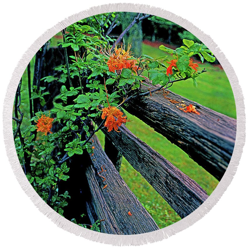 Virginia Round Beach Towel featuring the photograph Flame Azalea On Rustic Fence by Rich Walter