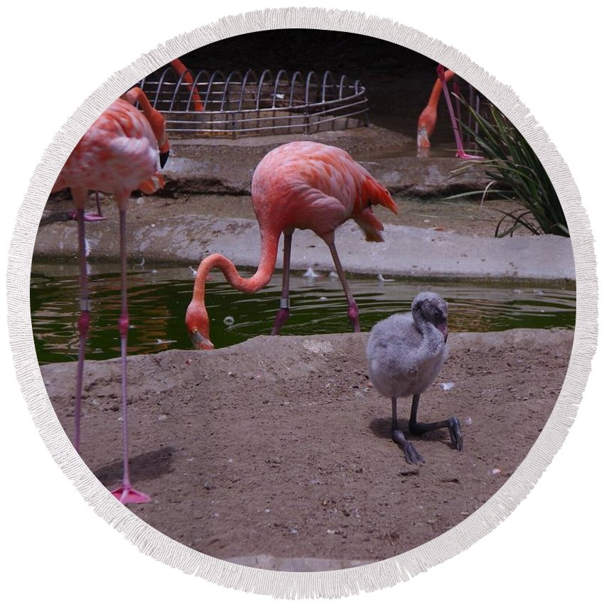 Flamingos Round Beach Towel featuring the photograph Flamgos 3 San Diego Zoo by Phyllis Spoor