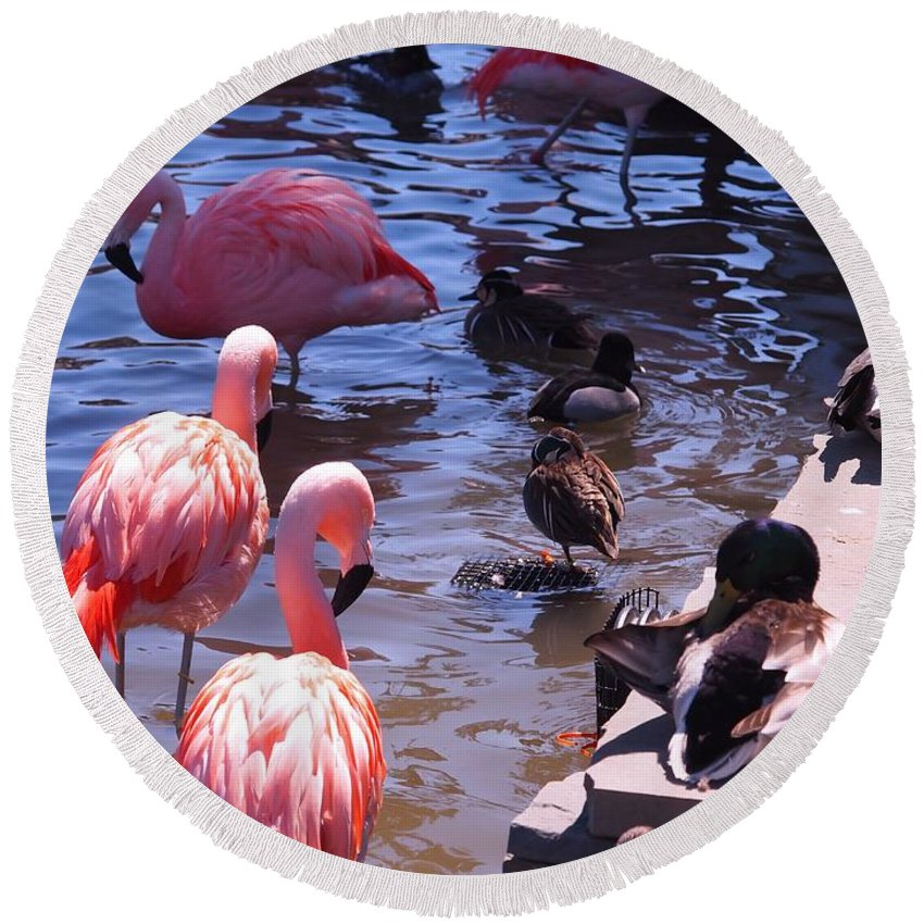 Flamingo Round Beach Towel featuring the photograph Flamingo Family by Jennifer Craft