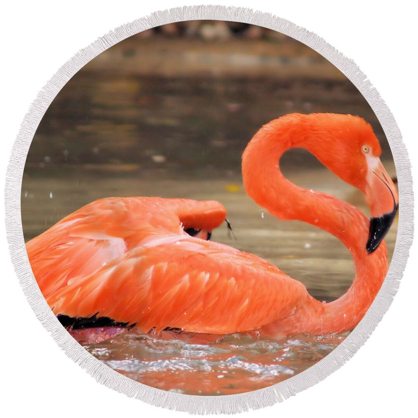 Flamingo Round Beach Towel featuring the photograph Flamingo by Gaby Swanson