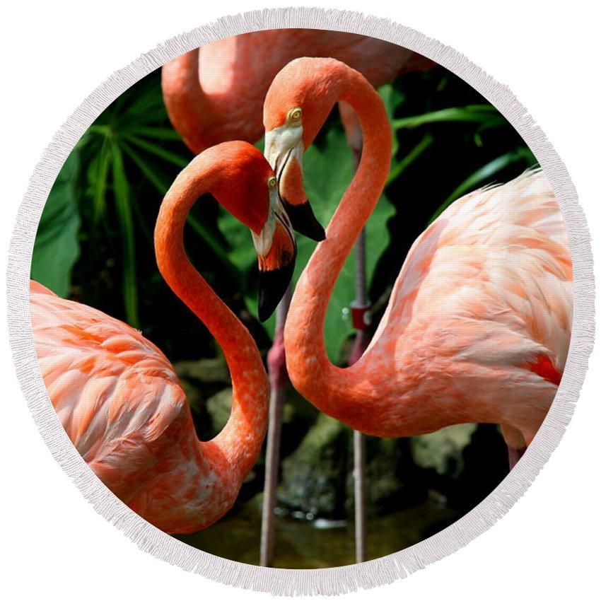 Pink Flamingo Round Beach Towel featuring the photograph Flamingo Heart by Barbara Bowen