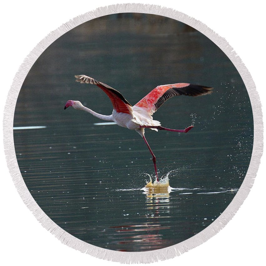 Flamingo Round Beach Towel featuring the photograph Flamingo Kick Off by Janet Chung