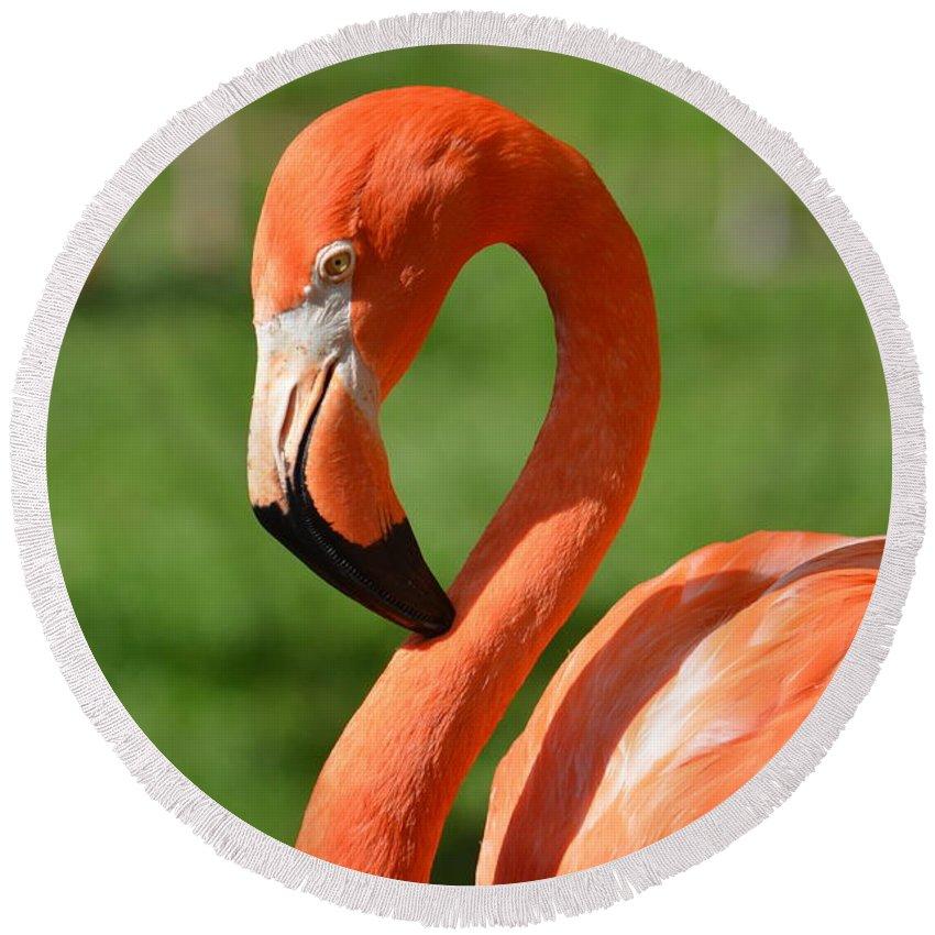 Flamingo Round Beach Towel featuring the photograph Flamingo by Maria Urso