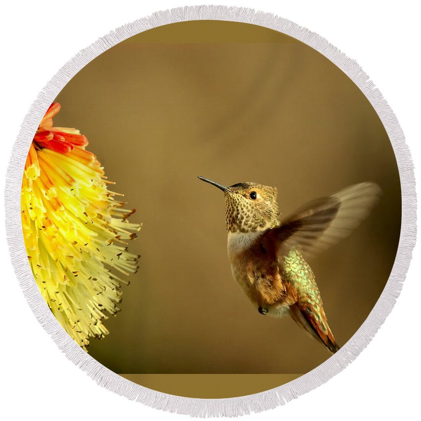 Hummingbird Round Beach Towel featuring the photograph Flight Of The Hummer by Mike Dawson