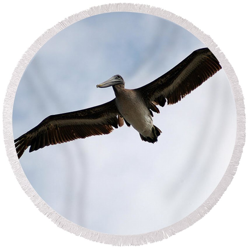 Clay Round Beach Towel featuring the photograph Flight Of The Pelican by Clayton Bruster