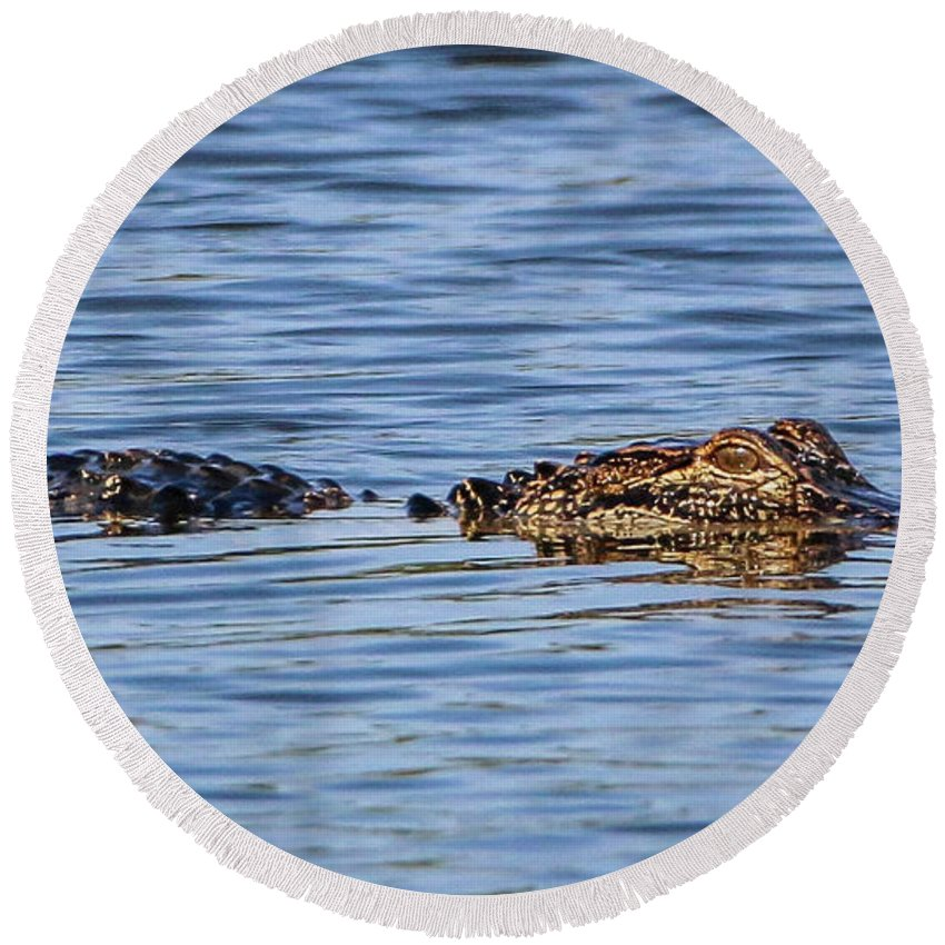 Gator Round Beach Towel featuring the photograph Floating Gator by Tom Claud
