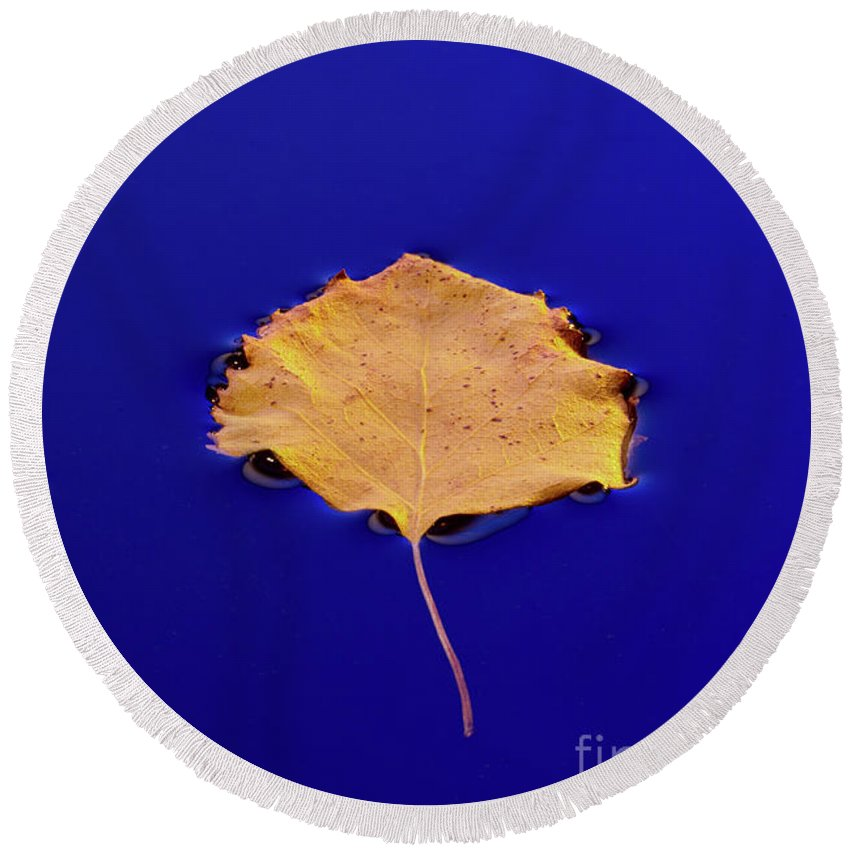 Floating Round Beach Towel featuring the photograph Floating Leaf 3 - Birch by Dean Birinyi