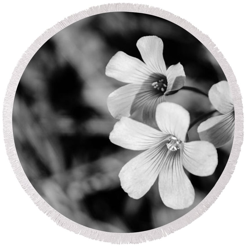Blossom Round Beach Towel featuring the photograph Floral Black And White by Andrea Anderegg