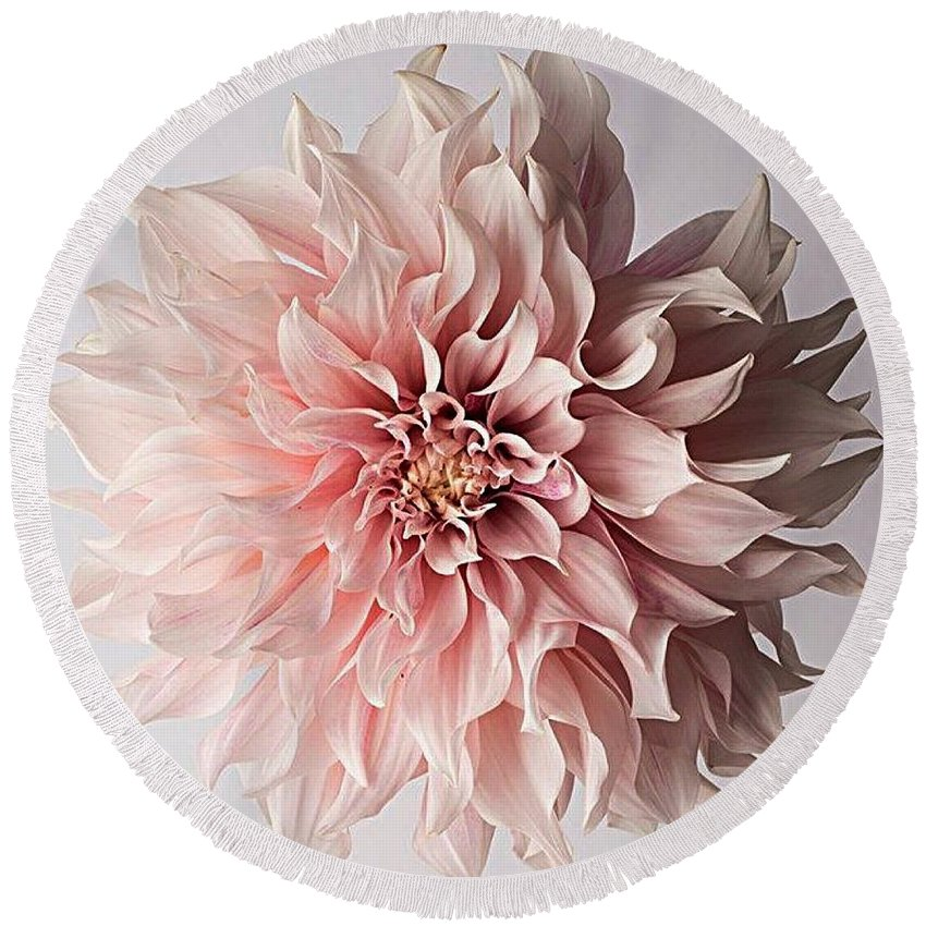 Flower Pink Elegant Breathtaking Round Beach Towel featuring the photograph Floral Elegance by Sarah Waldman