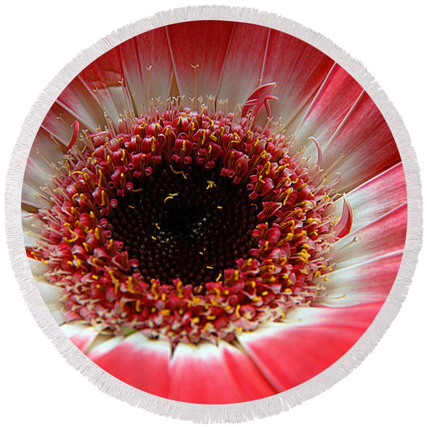 Clay Round Beach Towel featuring the photograph Floral Eye by Clayton Bruster