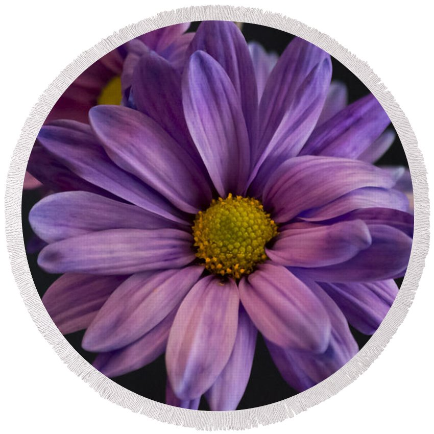 Florida Round Beach Towel featuring the photograph Florida Flowers - Purple Gerbera Daisy by Ronald Reid