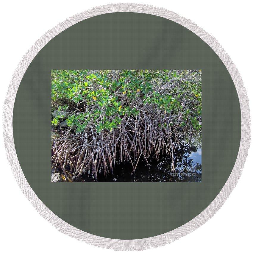 Mangrove Round Beach Towel featuring the photograph Florida - Mangroves by D Hackett