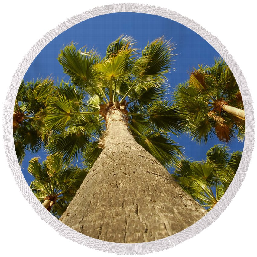 Florida. Palm Trees. Tropical Round Beach Towel featuring the photograph Florida Palms by David Lee Thompson
