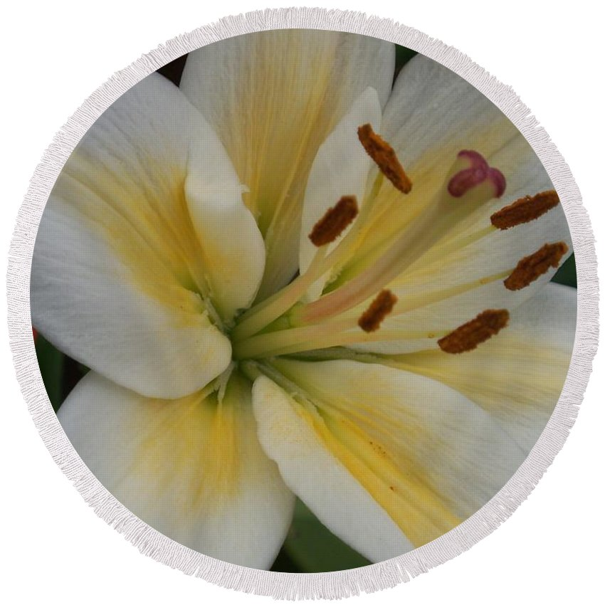 Flower Round Beach Towel featuring the photograph Flower Close Up 1 by Anita Burgermeister