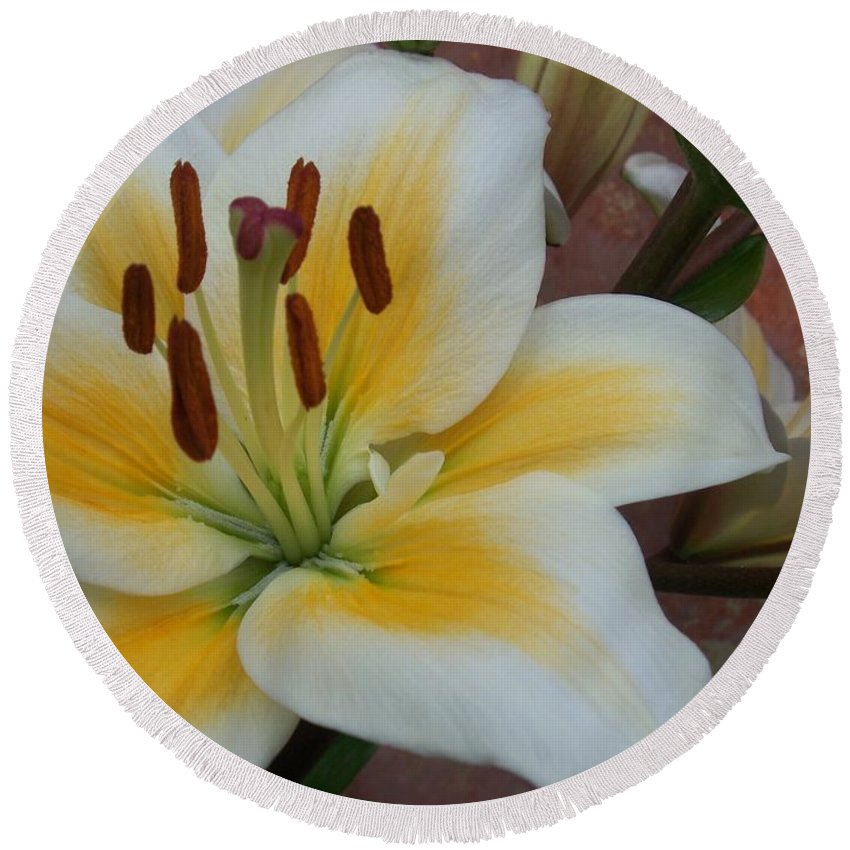 Flower Round Beach Towel featuring the photograph Flower Close Up 3 by Anita Burgermeister