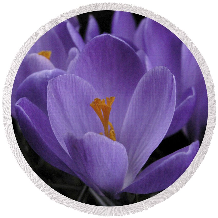 Flowers Round Beach Towel featuring the photograph Flower Crocus by Nancy Griswold