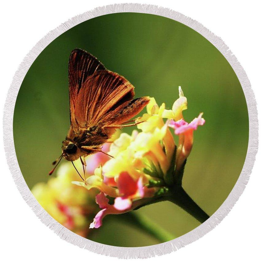 Butterfly Round Beach Towel featuring the photograph Flower Garden Friend by Kim Henderson