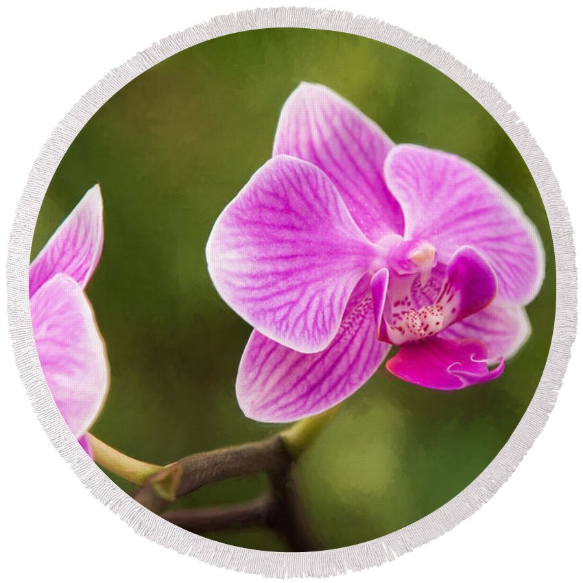 Nature Round Beach Towel featuring the photograph Flower - Pink Orchids by Sharon McConnell