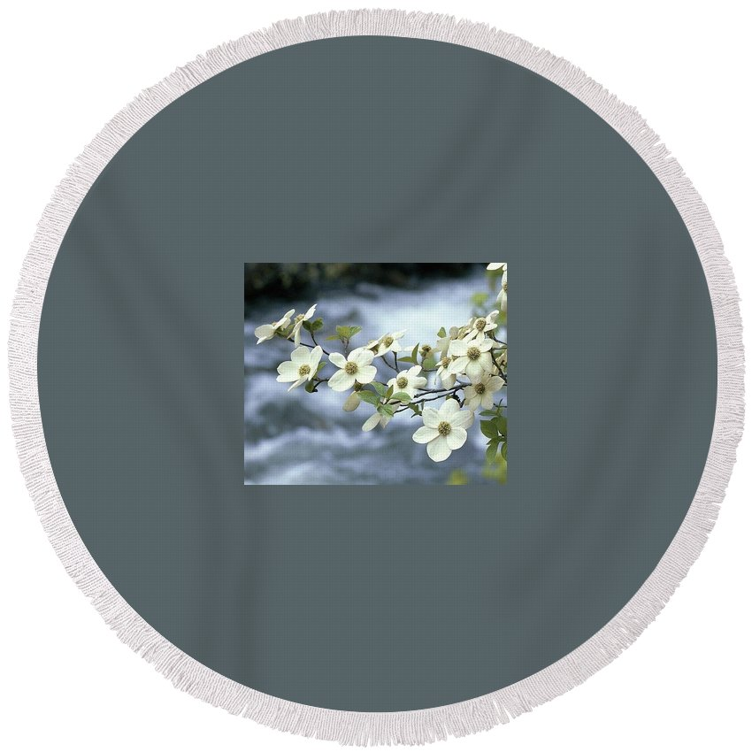 Dogwood Round Beach Towel featuring the photograph Flowering Dogwood by Kenneth Imler