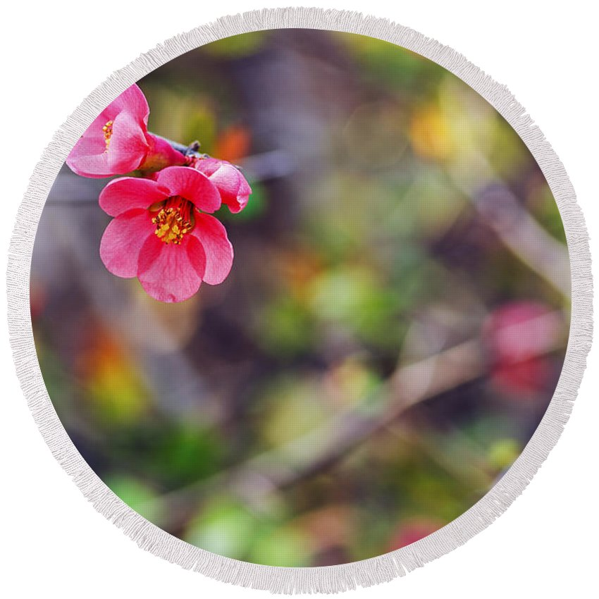 Flowering Quince Round Beach Towel featuring the photograph Flowering Quince In Spring by Vishwanath Bhat