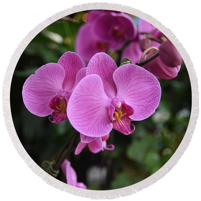 Orchids Photos Round Beach Towel featuring the photograph Flowers 820 by Joyce StJames