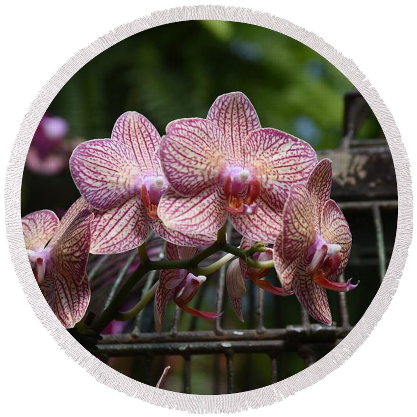 Orchids Photos Round Beach Towel featuring the photograph Flowers 826 by Joyce StJames