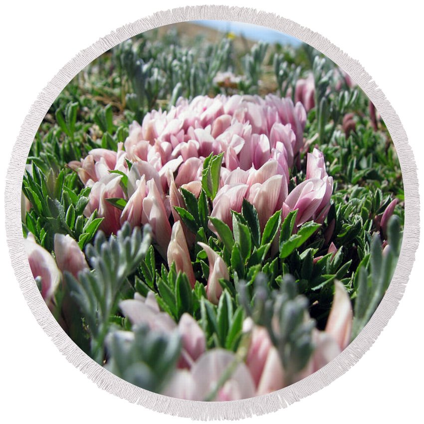 Flowers Round Beach Towel featuring the photograph Flowers In The Alpine Tundra by Amanda Barcon