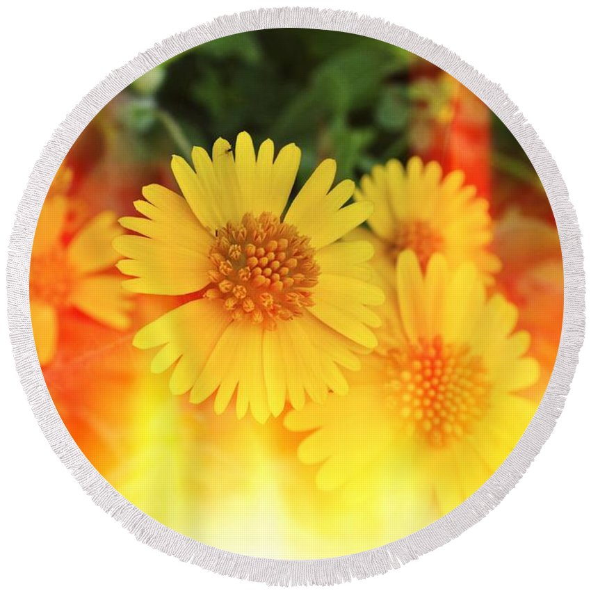 Flowers Round Beach Towel featuring the photograph Flowers On Fire by Gary Richards