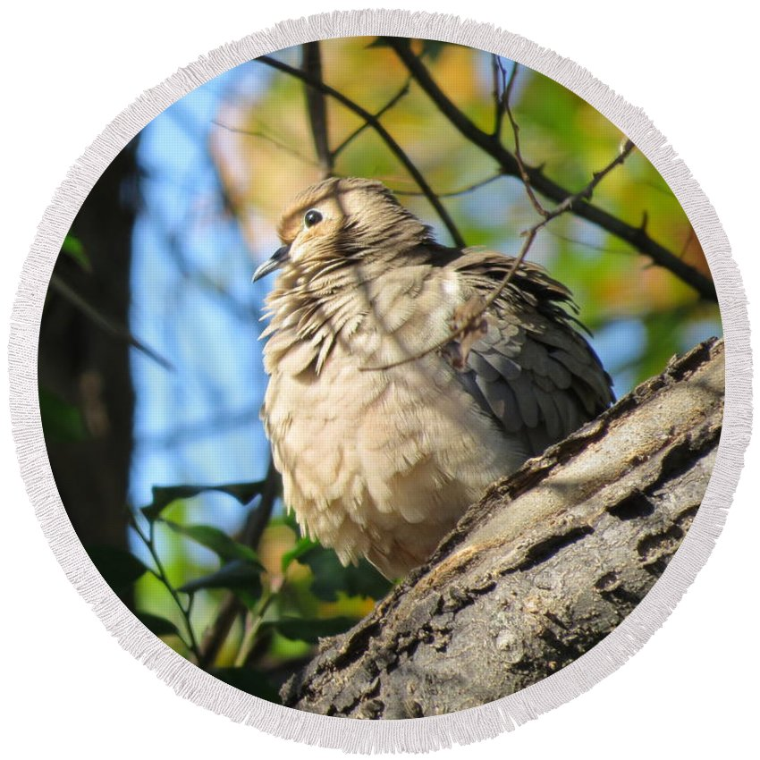Mourning Dove Round Beach Towel featuring the photograph Fluffy by Charles Green