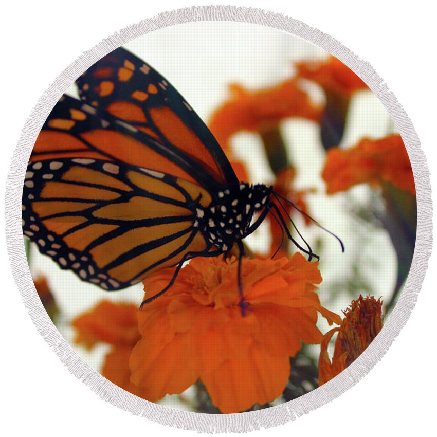 Butterfly Round Beach Towel featuring the photograph Flutterby by Samantha Burrow