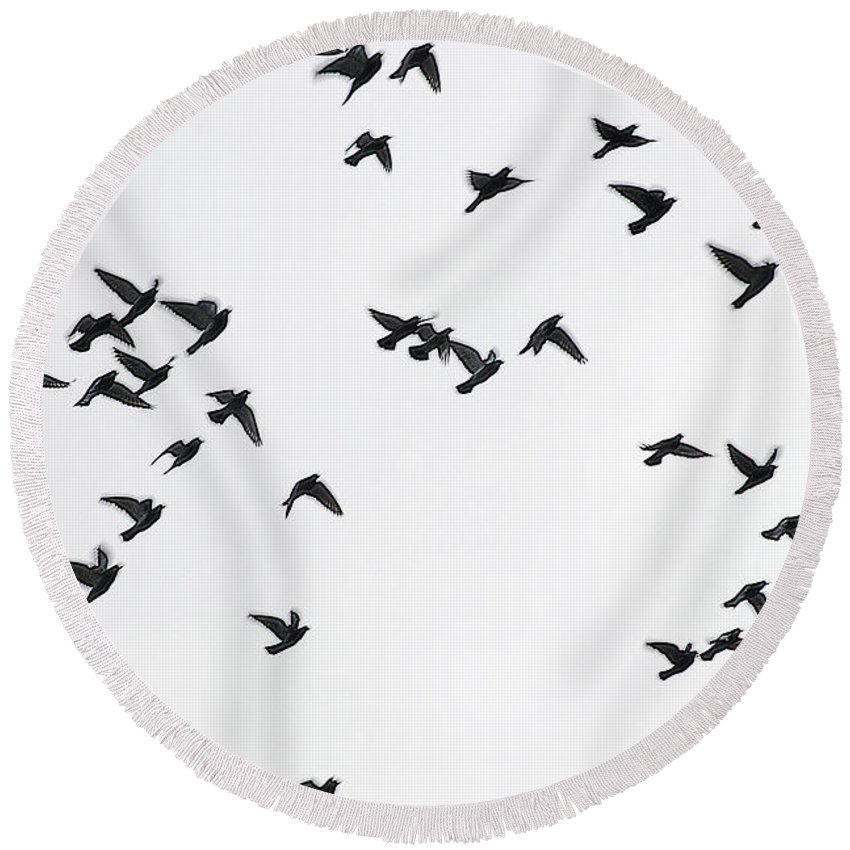 Pigeons Round Beach Towel featuring the photograph Flying Pigeons by Elvira Ladocki
