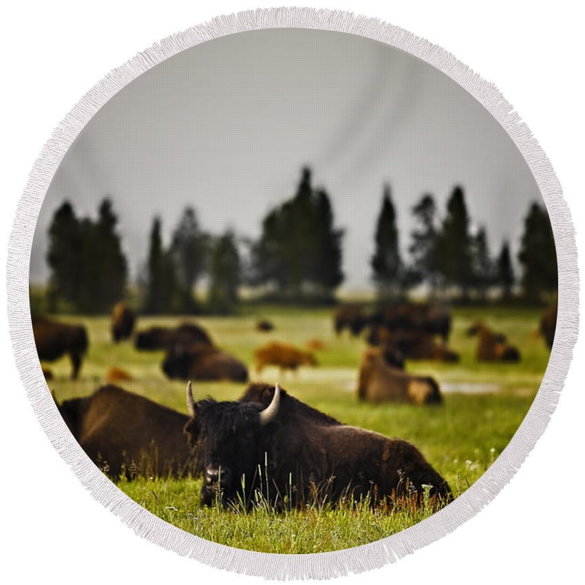 Nature Round Beach Towel featuring the photograph Foggy Herd by John K Sampson