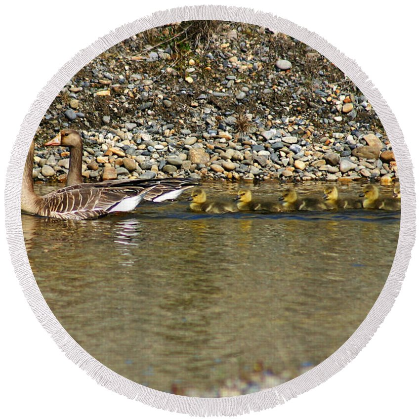 Ducks Round Beach Towel featuring the photograph Follow The Leader by Anthony Jones