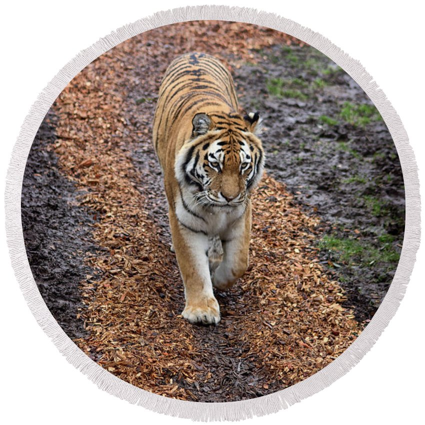 Tiger Round Beach Towel featuring the photograph Follow Your Path In Life by Martin Newman