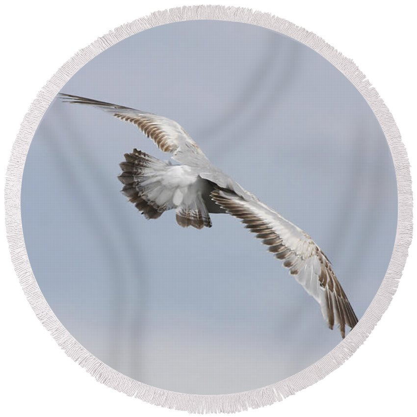 Seagull Round Beach Towel featuring the photograph Following The Seagull by Deborah Benoit