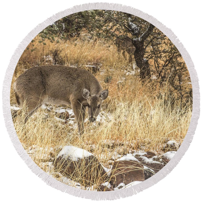 Deer Round Beach Towel featuring the photograph Foraging In The Snow by Renny Spencer