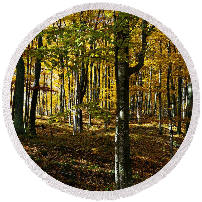 Trees Round Beach Towel featuring the photograph Forest Floor Two by Tim Nyberg