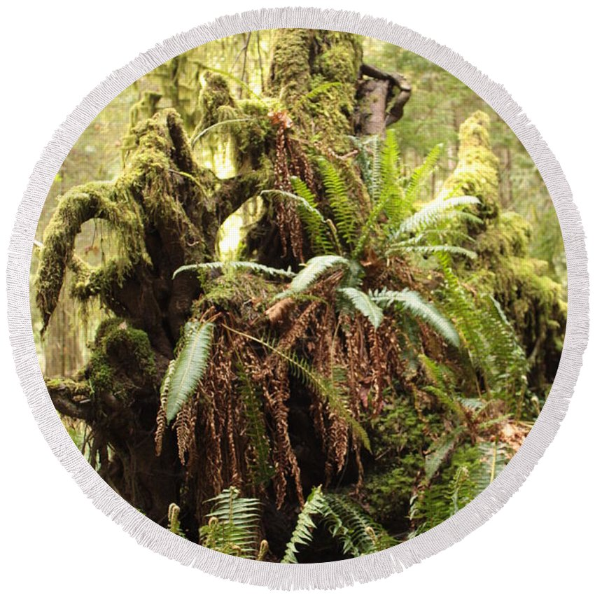 Rainforest Round Beach Towel featuring the photograph Forest Revival by Carol Groenen