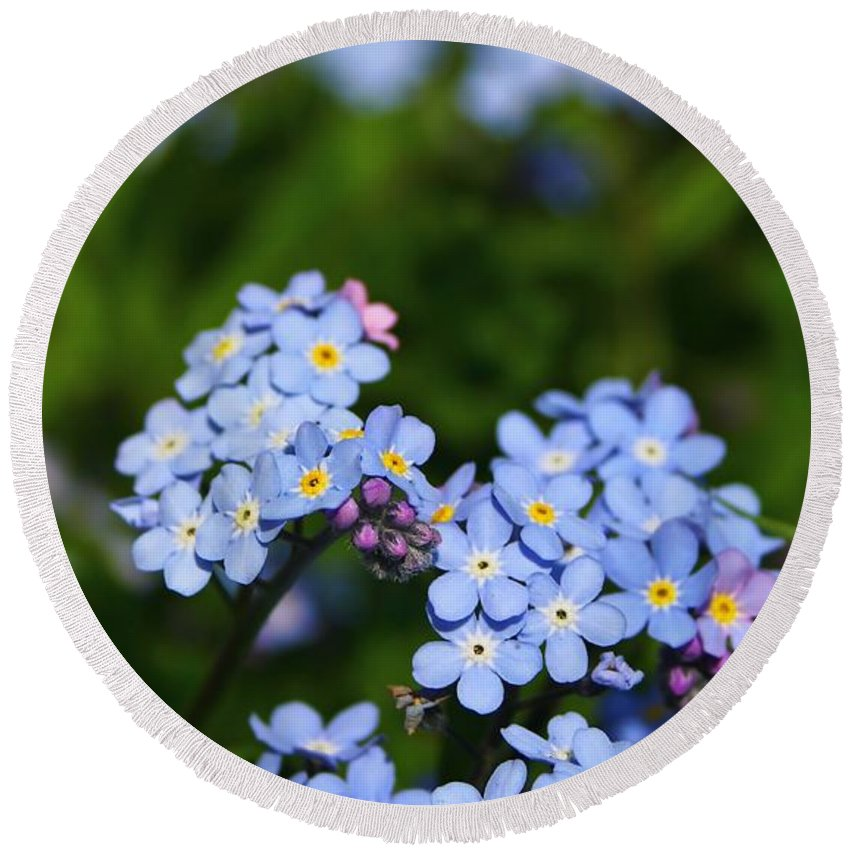 Forget Me Not Round Beach Towel featuring the photograph Forget Me Not 1 by Mo Barton