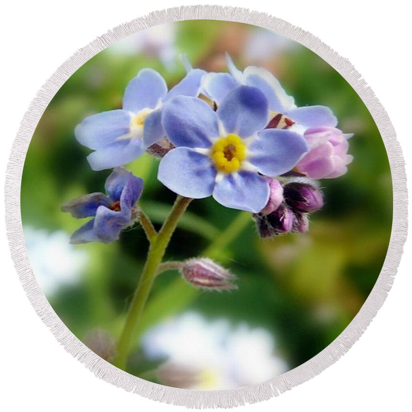 Forget-me-not Flower Round Beach Towel featuring the pyrography Forget-me-not by Morag Bates