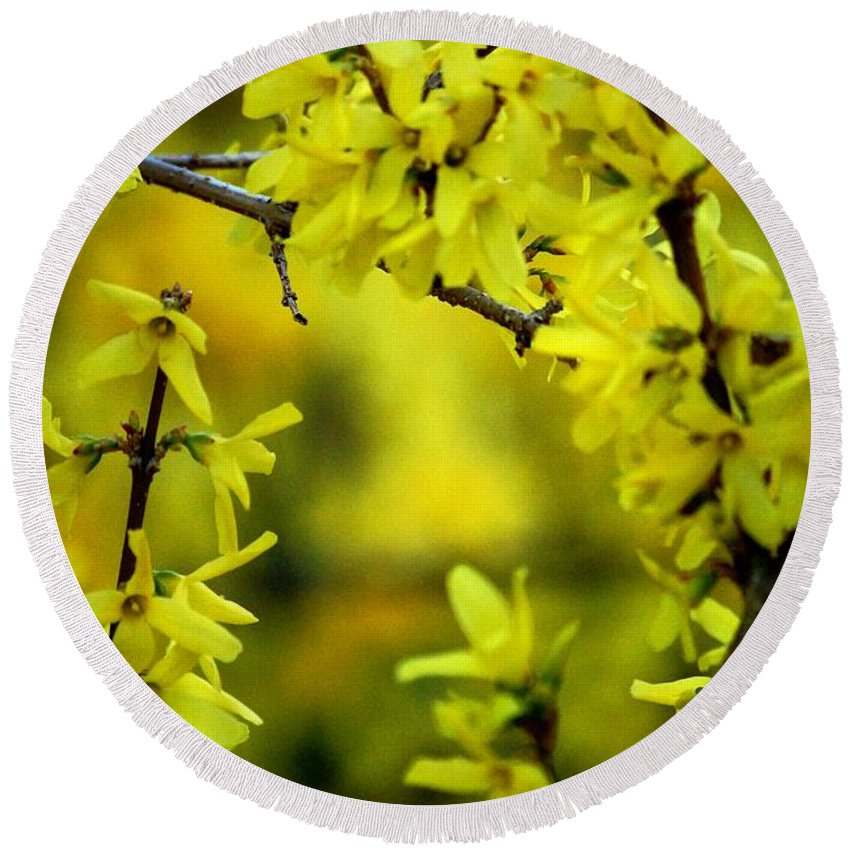 Spring Round Beach Towel featuring the photograph Forsythia At The Hacienda by David Lane