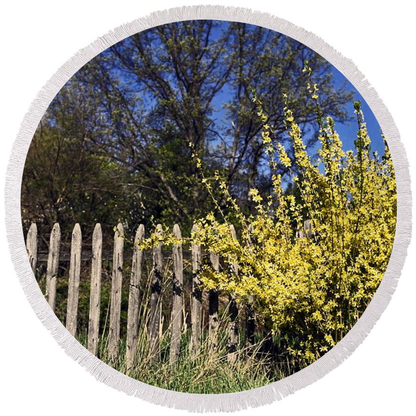 Forsythia Round Beach Towel featuring the photograph Forsythia By A Weathered Fence by Sally Weigand