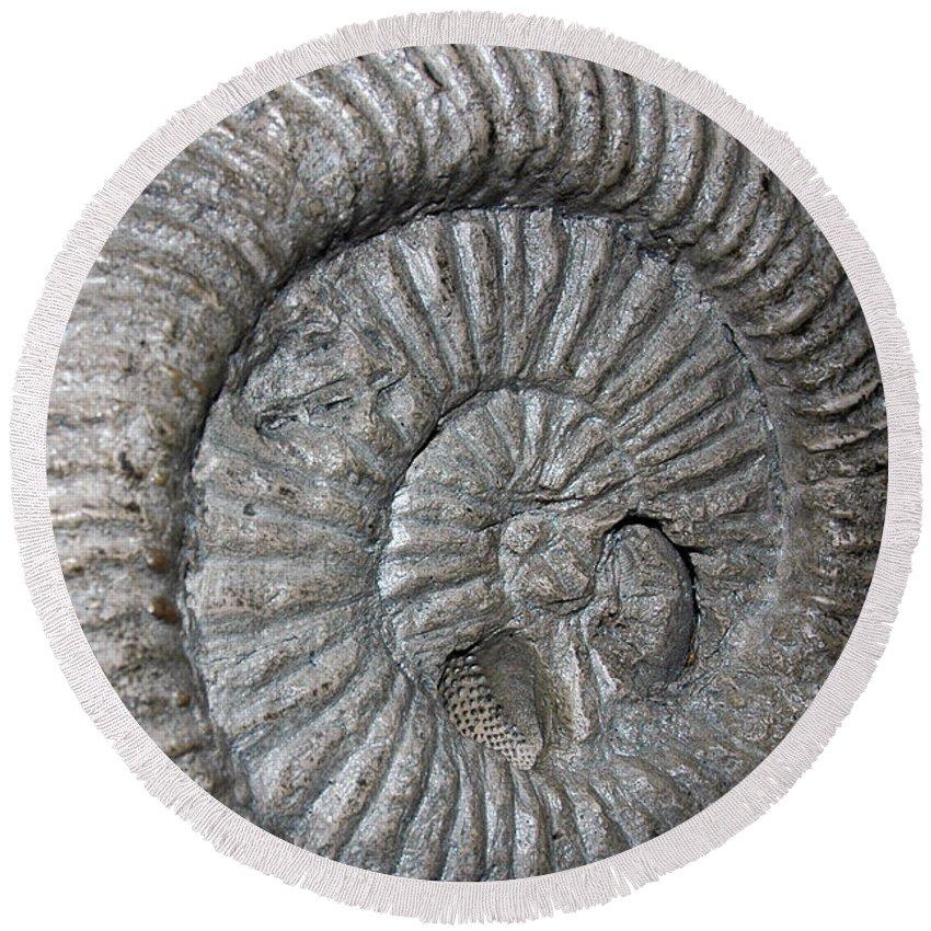 Usa Round Beach Towel featuring the photograph Fossil Spiral by LeeAnn McLaneGoetz McLaneGoetzStudioLLCcom