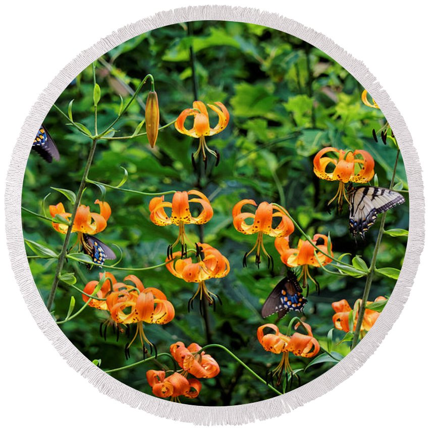 Turks Cap Lilies Round Beach Towel featuring the photograph Four Butterflies On Turks Cap Lilies by David Rowe