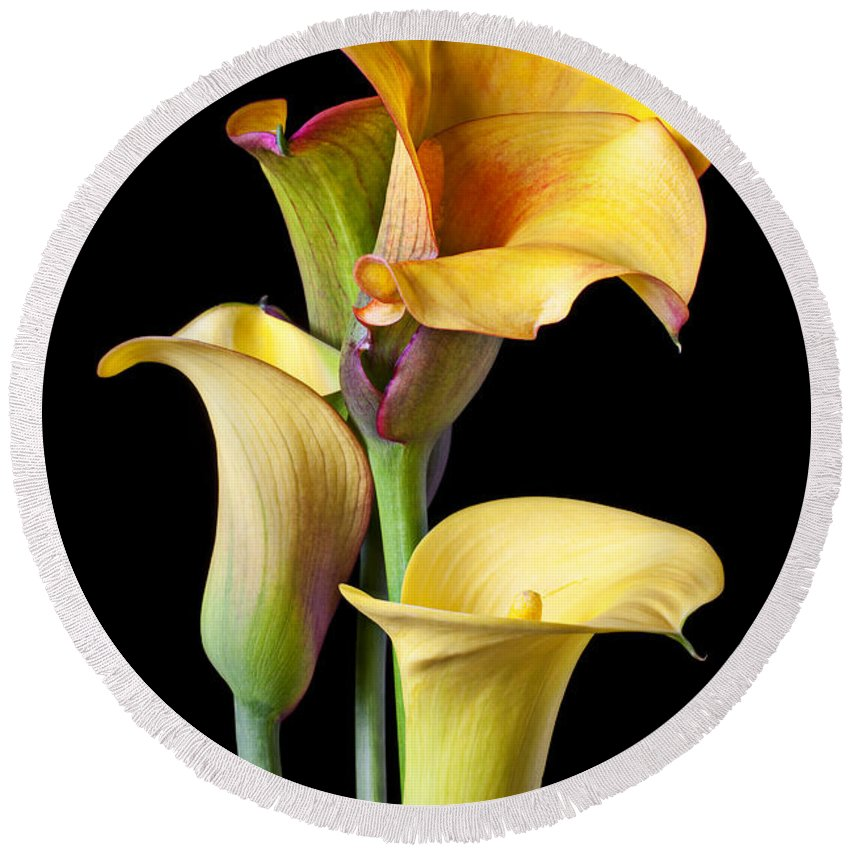Calla Lily Round Beach Towel featuring the photograph Four Calla Lilies by Garry Gay