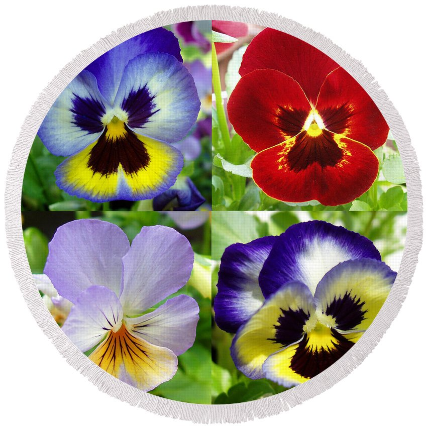 Pansy Round Beach Towel featuring the photograph Four Pansies by Nancy Mueller