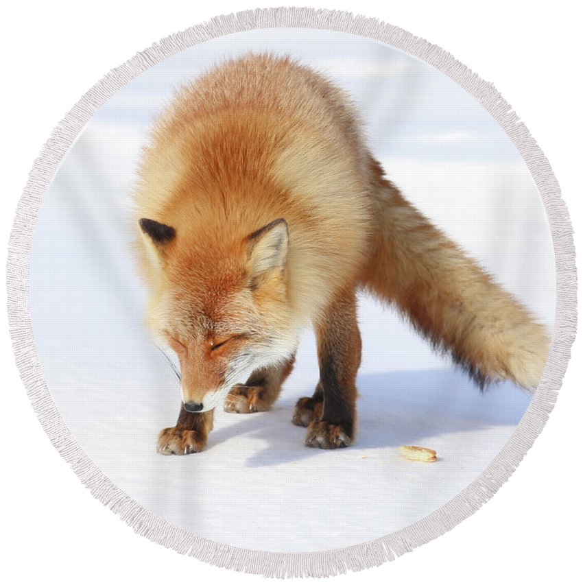 Fox Round Beach Towel featuring the photograph Foxy Lady by Leigh Lofgren