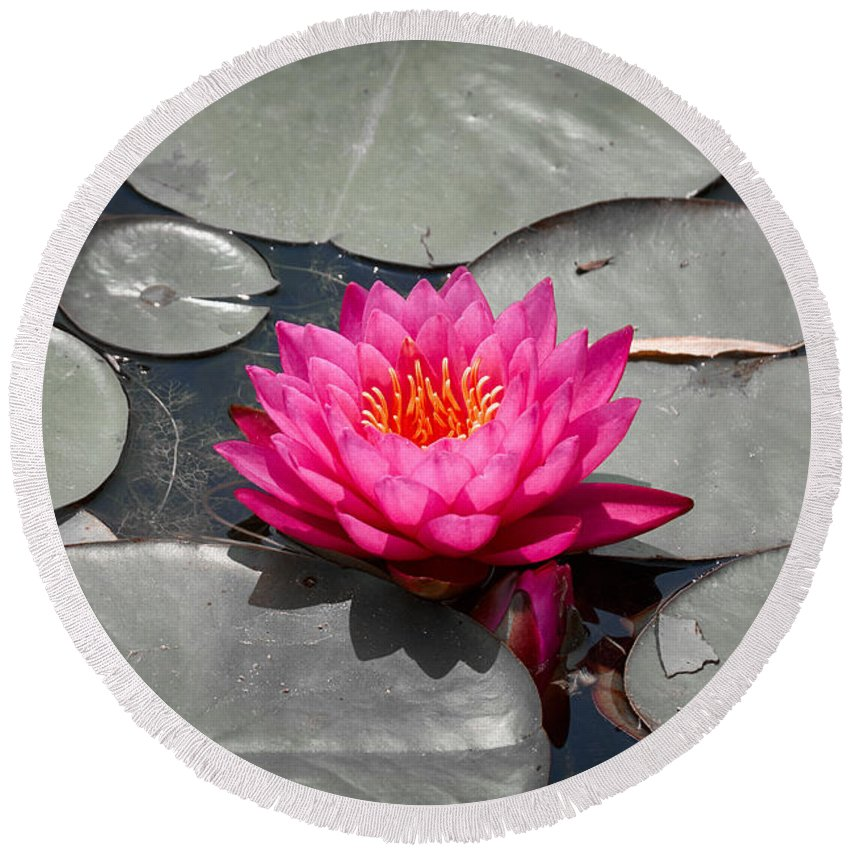 Purple Round Beach Towel featuring the photograph Fragrant Water Lily by Graesen Arnoff
